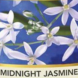 Midnight Jasmine Auto, Diffusore Elettrico e Sfere Profumate