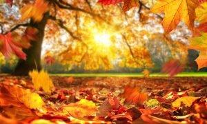 Read more about the article Le 5 migliori Frangranze Yankee Candle per l'autunno