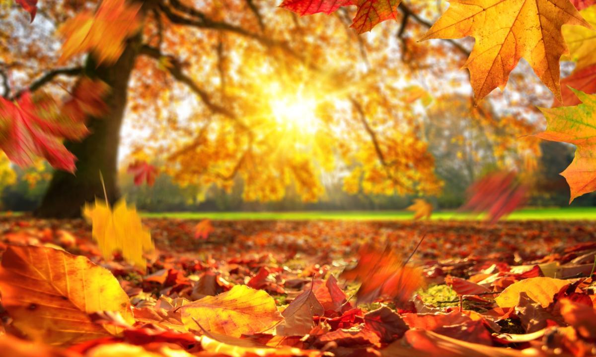 Read more about the article Le 5 migliori Fragranze Yankee Candle per l'autunno